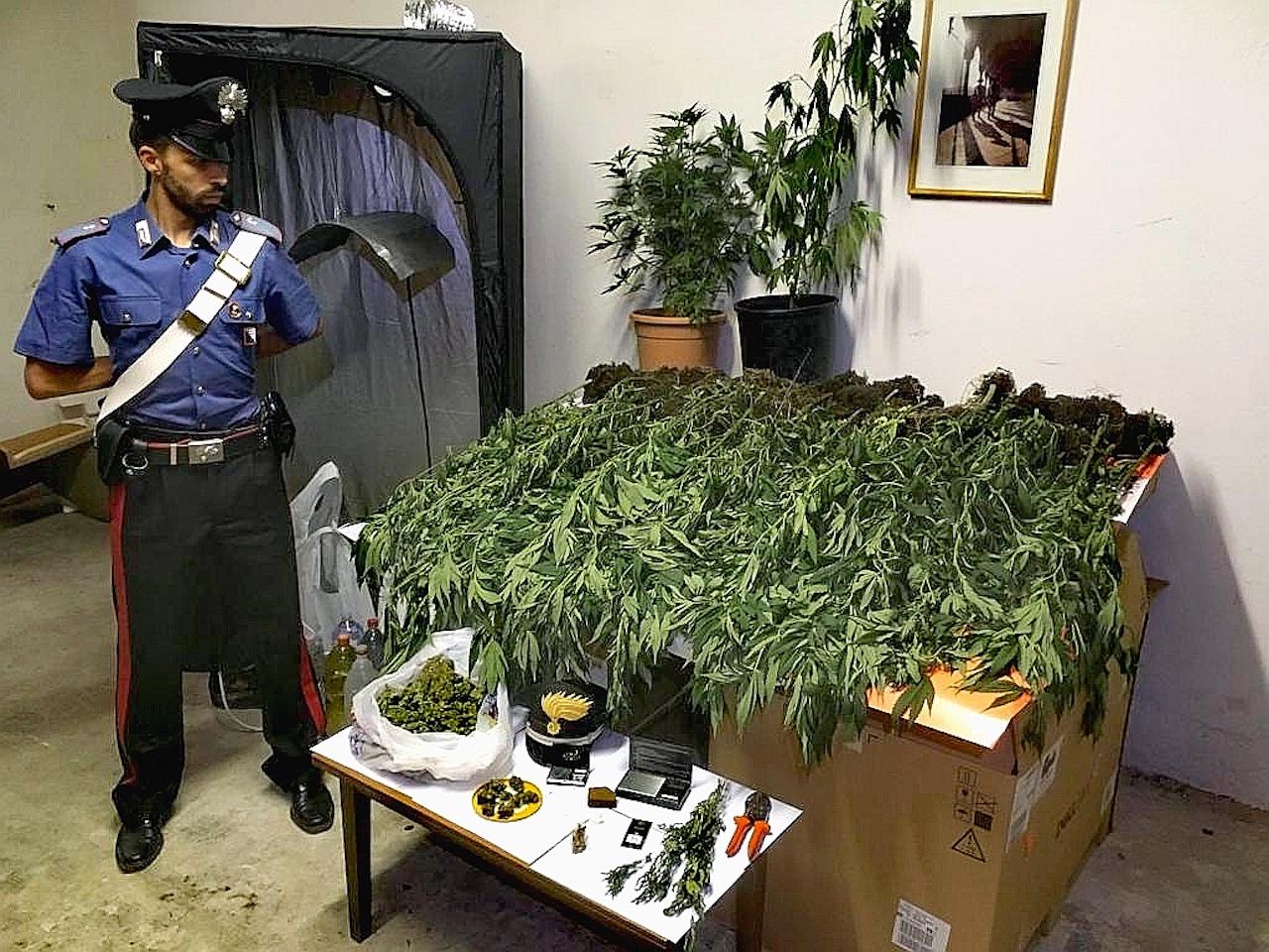 Piccole Serre Da Casa marijuana nel campo e in casa serra e arsenale per lo