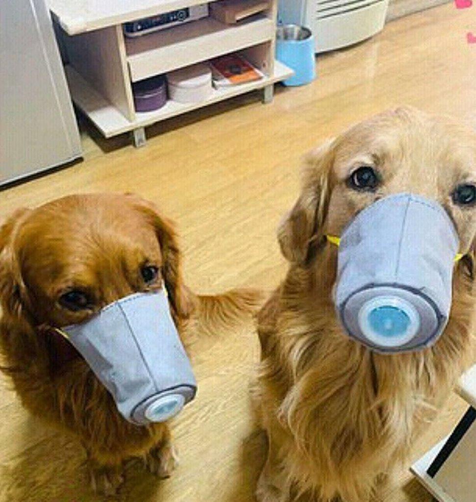 Domande Al Veterinario Cane il coronavirus può colpire i nostri cani? la risposta dei